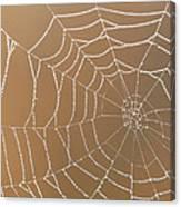 Morning Dew On Web Canvas Print