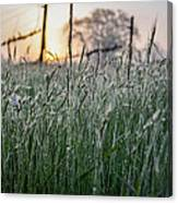 Morning Dew - View Through The Grass Canvas Print
