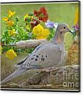 Morning Dove With Pansies Canvas Print