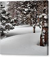 Morning Drifts Canvas Print