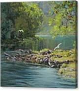 Morning Gathering Canvas Print