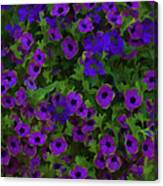 Morning Glories Are Beautiful Canvas Print