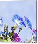 Morning Glory Flowers Canvas Print
