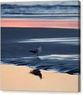 Morning Gull Canvas Print
