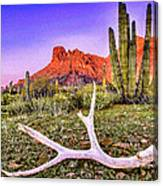 Morning In Organ Pipe Cactus National Monument Canvas Print