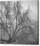 Morning In The Fog. M Canvas Print
