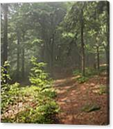 Morning In The Forest Canvas Print