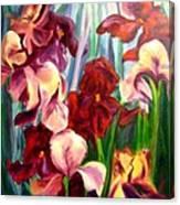 Morning Iris Canvas Print