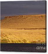 Morning Light At Catnip Canvas Print