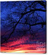 Morning Light Oak Tree Canvas Print