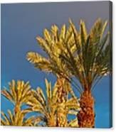 Morning Light Palms Canvas Print