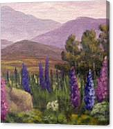 Morning Lupines Canvas Print