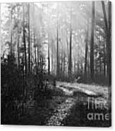 Morning Mist In Monochrome Canvas Print