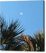 Morning Moon Over Palms Canvas Print