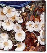 Morning Mushrooms Canvas Print