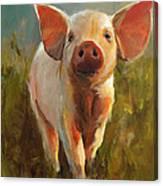 Morning Pig Canvas Print