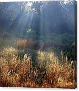 Morning Rays Through Live Oaks Canvas Print