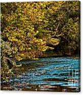 Morning River Canvas Print
