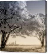 Morning Softness II - Blue Ridge Parkway Canvas Print