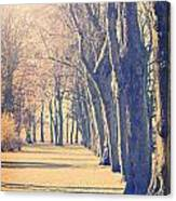 Morning Trees Canvas Print