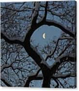Morning Twilight Canvas Print