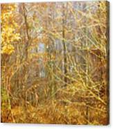 Landscape - Morning Walk In The Woods - 2 Canvas Print