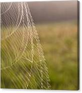 Morning Web Canvas Print