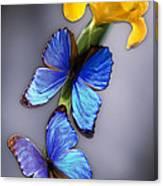 Morpho On Yellow Iris Canvas Print