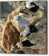 Morro Rock Nesting Canvas Print