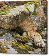 Moss And Lichens In The Scottish Highlands Canvas Print