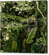 Moss And Stones By The Turquoise Forest Pond On A Summer Day No4 Canvas Print