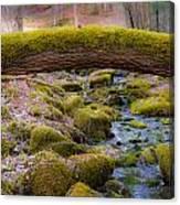 Moss Bridge Canvas Print