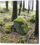 Moss-covered Boulder Canvas Print