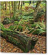 Moss Covered Logs On The Forest Floor Canvas Print