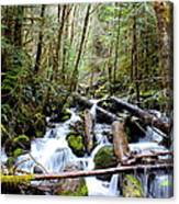 Moss Creek Canvas Print