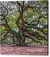 Moss Draped Limbs Canvas Print