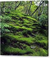 Moss Forest In Kyoto Japan Canvas Print