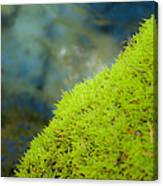 Moss On River Canvas Print