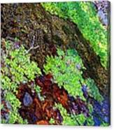 Moss Pond Canvas Print