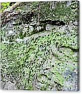 Moss Rock Canvas Print