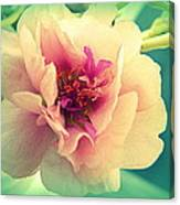 Moss Rose Abstract Canvas Print