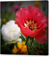Moss Roses Canvas Print