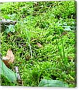 Mossy Bed Canvas Print
