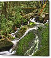 Mossy Creek Canvas Print