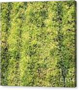 Mossy Grass Canvas Print
