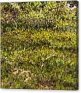 Mossy Green Canvas Print