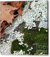 Mossy Leaves Canvas Print
