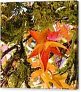 Mossy Lichen Tree Leaves Art Prints Autumn Canvas Print