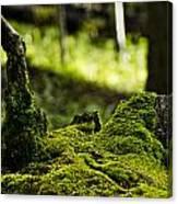 Mossy Log Canvas Print