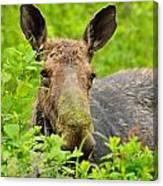 Mossy Moose Canvas Print